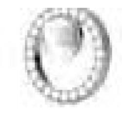 Orecchini Post Foratura Pearl In Crystal Circle Bjt985